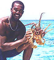 Captain Arthur Dean with Turks and Caicos lobsters